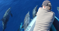 Wal und Delfin Beobachtung Madeirad