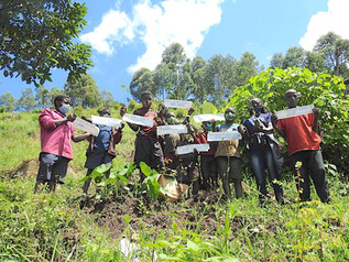 10,000 Trees Campaign