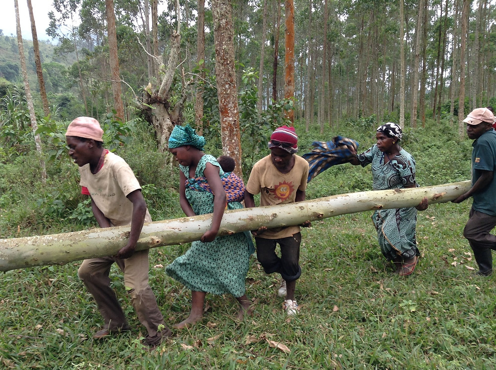Everyone carried the heavy logs to the site, even after they first thought they couldnt!