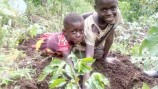 Cool Beans: Coffee Arabica Farming in Uganda