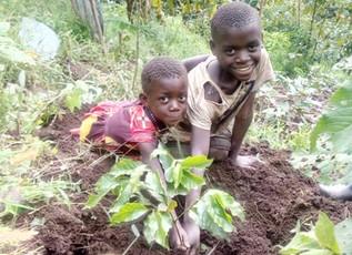 Cool Beans: Coffee Arabica Farming in Uganda