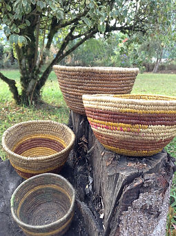 Four natural weave handmade bowls or baskets in a green yard with a tree in the background