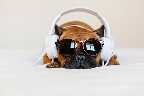 cute brown french bulldog sitting on the