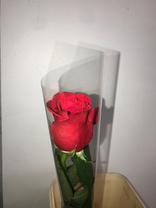 Red Single Roses