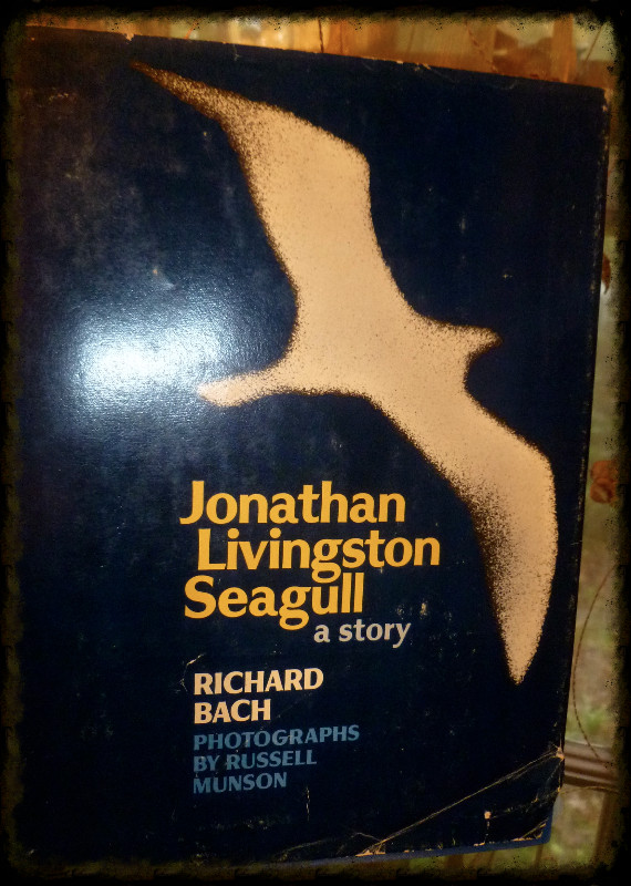 jl seagull_edited.jpg