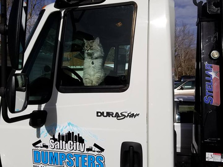 An overview of the dumpster rental service