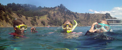 Snorkelling at Goat Island