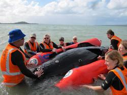 Marine mammal medic training