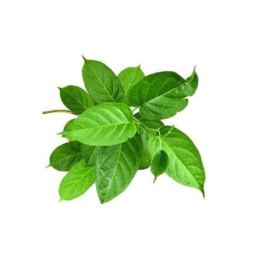Gurmar (Gymnema sylvestre) Extract Gymnemic Acids 25% by Gravimetry