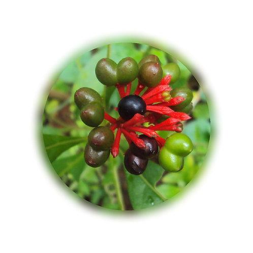 Sarpagandha (Rauwolfia serpentina) Extract Alkaloids 1.5% by Gravimetry