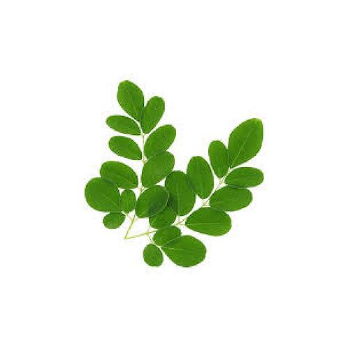Moringa (Moringa oleifera) Powder