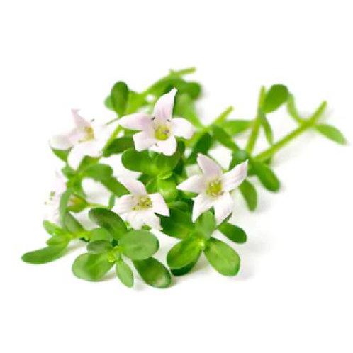 Neer Brahmi (Bacopa monnieri) Extract Bacosides 10% by UV