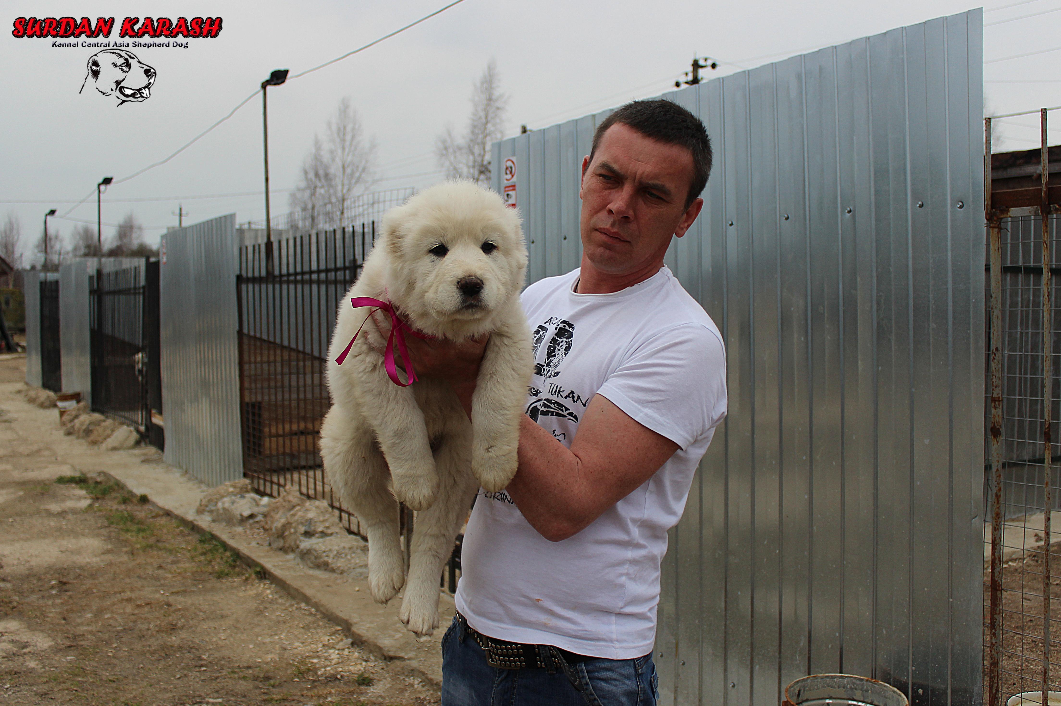 СУРДАН КАРАШ ЛОЛИТА