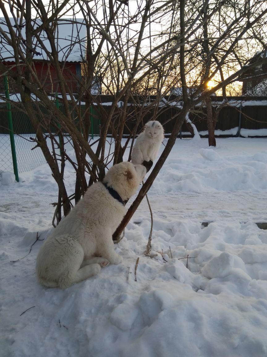 СУРДАН КАРАШ КАЙБАР