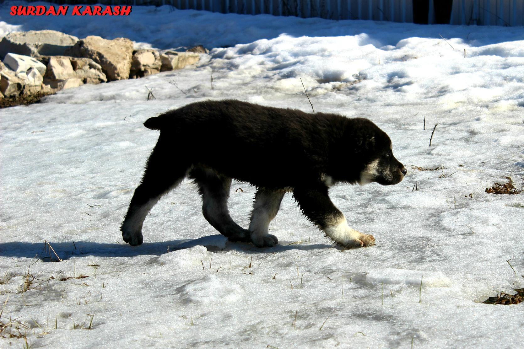 ДЕМДИ-УЛУГ-СЕРДАР