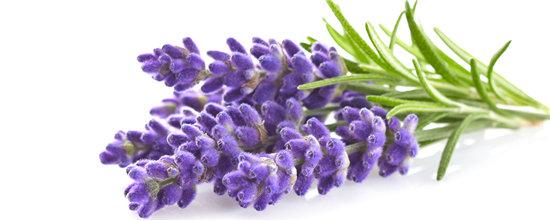 Shower Gel - Lavender & Rosehip