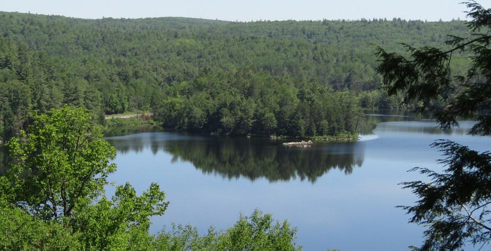 Trout Lake View