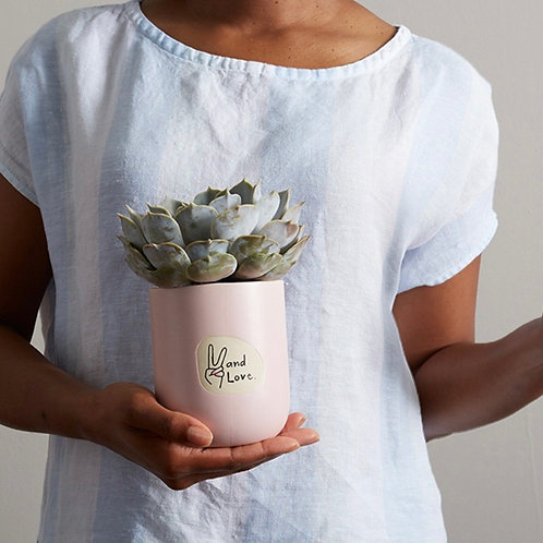 Fox & Fern Floral ~Succulent Love