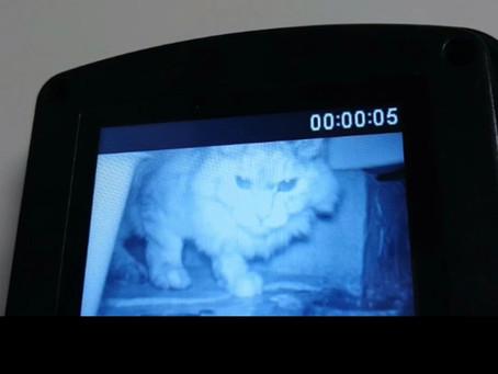 迷子猫:保護されました!(あんずちゃん)