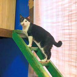 脱走したがるのは猫の習性?