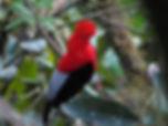 アンデス岩鳥 ミンド エクアドル 南米ワイン 南米旅行 ラグジュアリー旅行 ラグジャリーホテル