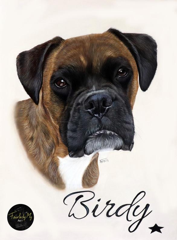 Birdy le Boxer