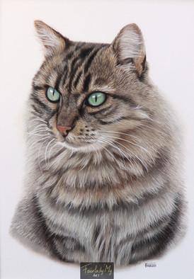 Calimero le chat