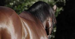 horse_stallion.jpg
