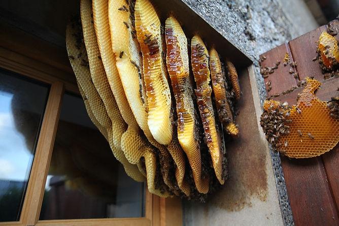 nid d'abeille.jpg