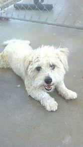 high kill shelter dog