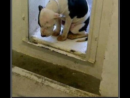 If you read this, you would adopt, not shop.