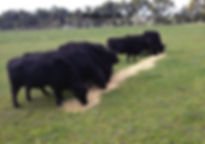East Geelongs Quality Butcher
