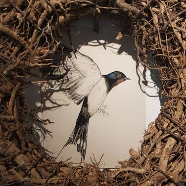 les hirondelles sont de retour pour faire leur nid