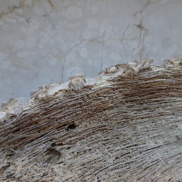 Detail Natur