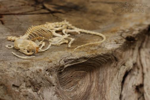 skeleton w logo.jpg