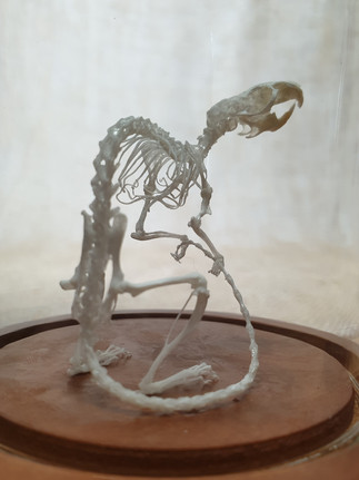 Skeletal Articulation - Mouse