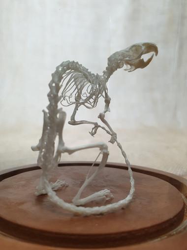 Skeletal Articulation - Mouse