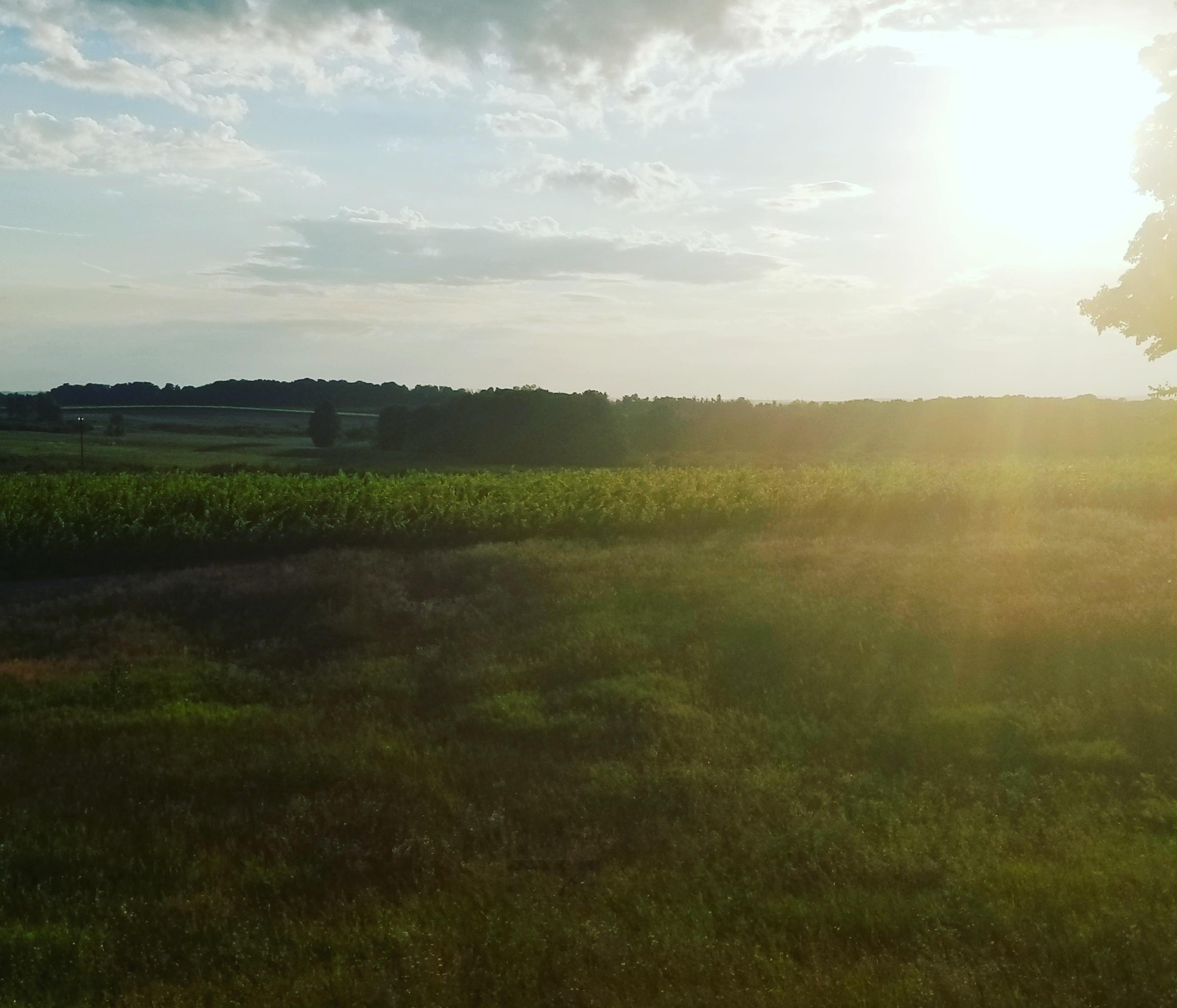 Aimée Vineyards sunset