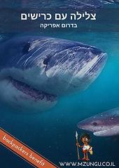 Shark Diving (1).jpg