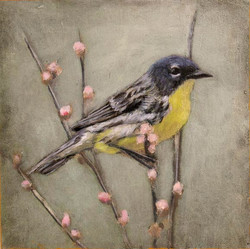 30.WebBird.jpg