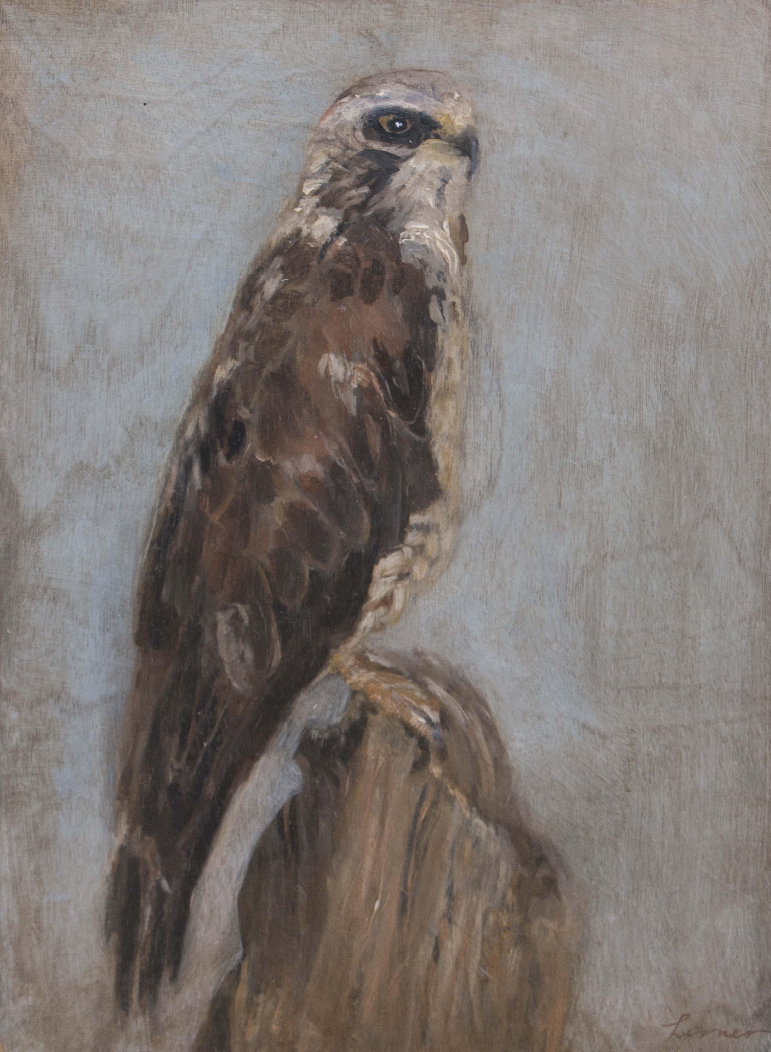 Hawk#1