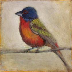 32.WebBird.jpg