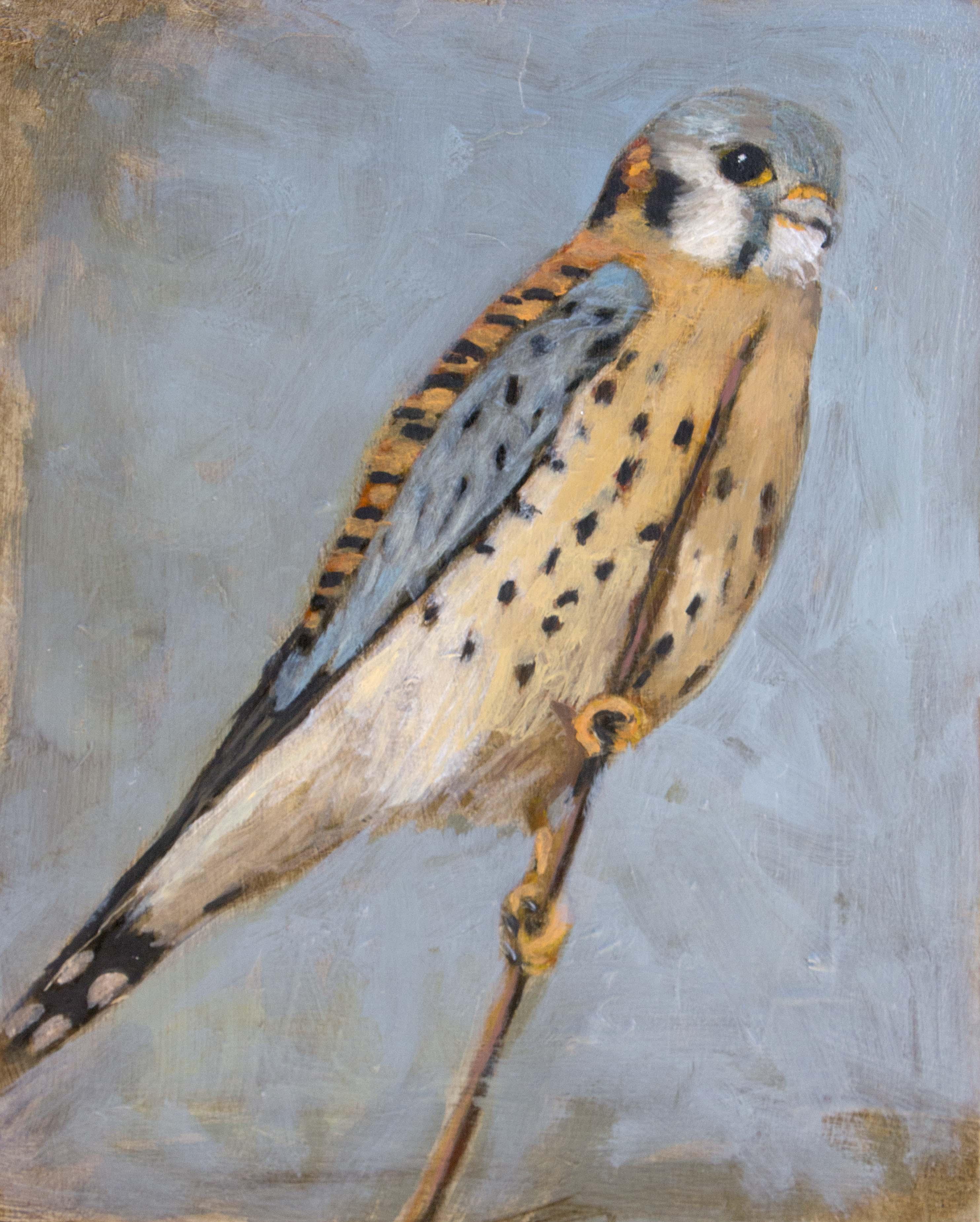 Hawk#5