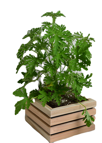Honeyfur Planter - Sm. Square