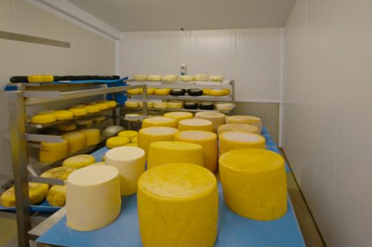 Guernsleigh Cheeses maturing