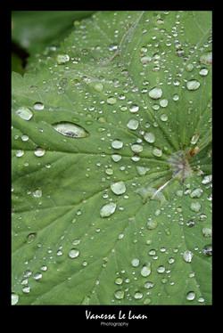 webreadyrain-drop-leaf.jpg