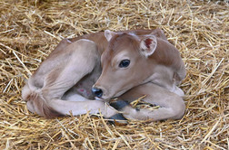 18 hours old