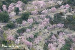 DSC_3207spring-blossom.jpg