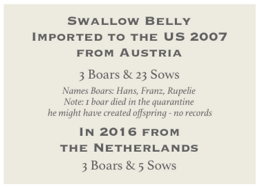Swallow belly Imports to USA 2007 & 2016