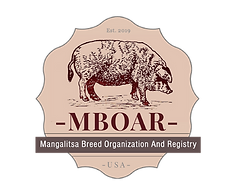 Logo MBOAR - without background version